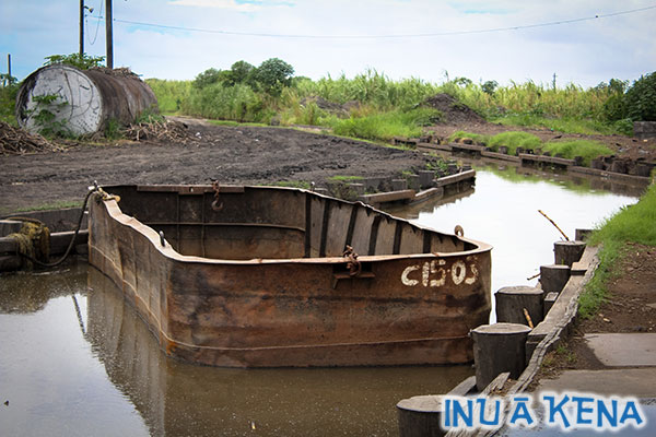 Punts convey cane from field to factory