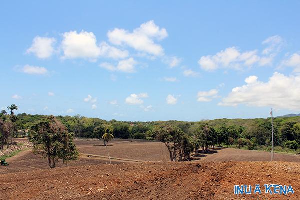 A Cane Co. cane field under development in Grenada, West Indies