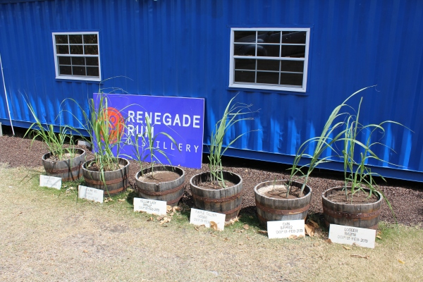 Renegade Rum office at Westerhall Estate